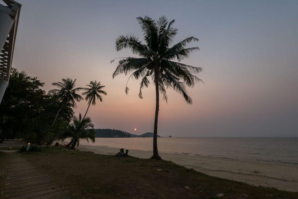 Пальма на пляже Ко-Мак на закате