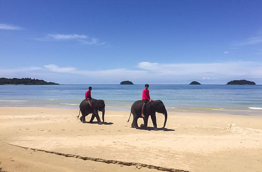 Слоны на пляже Кай-Бэй на Ко-Чанге